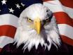 AmericanEagle_34